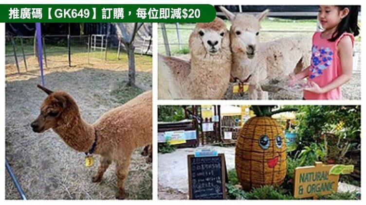 【全港首間農莊引入澳洲羊駝】獨家錦田有機菠蘿園【親親羊駝】入場套票 $190